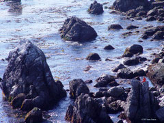 rugged rocky coast - person meditating while sitting on rock